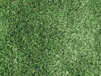 Detailfoto van het gras